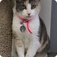 Adopt A Pet :: Opal - Bradenton, FL
