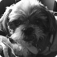 Adopt A Pet :: Cabela Montgomery - Urbana, OH