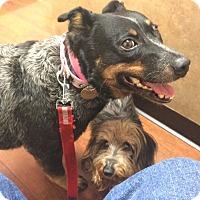 Adopt A Pet :: Heather - Oak Ridge, NJ