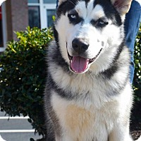 Adopt A Pet :: Rocky - Roswell, GA