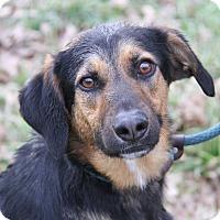 Adopt A Pet :: Dana (Neutered) - Marietta, OH