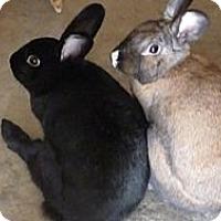 Adopt A Pet :: Emily and Mortimer - El Cerrito, CA