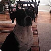 Adopt A Pet :: Koa - Evans, CO
