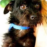 Adopt A Pet :: Nixon - Mission Viejo, CA