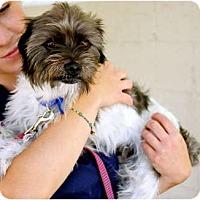 Adopt A Pet :: Roofus - Mission Viejo, CA
