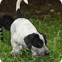 Adopt A Pet :: Delta - Staunton, VA