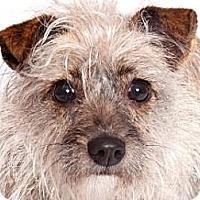 Adopt A Pet :: JoJo - Milan, NY