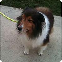 Adopt A Pet :: Joey - Hilliard, OH