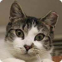 Adopt A Pet :: Simone - North Branford, CT