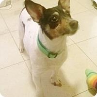 Adopt A Pet :: Eva - Medford, MA