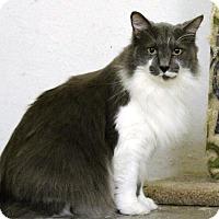 Adopt A Pet :: Kylee - Omaha, NE
