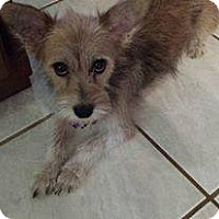 Adopt A Pet :: Tilly - Wyanet, IL