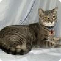 Adopt A Pet :: Tia - Powell, OH
