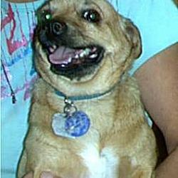 Photo 2 - Chihuahua Mix Dog for adoption in Phoenix, Arizona - Pancho