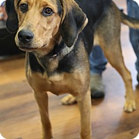 Adopt A Pet :: Lana *Adoption Pending* - Manassas, VA