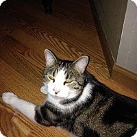 Adopt A Pet :: Martin - Columbus, OH