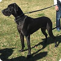 Adopt A Pet :: Finn - Boonton, NJ