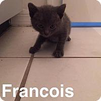 Adopt A Pet :: Francois - Gainesville, FL
