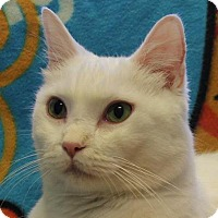 Adopt A Pet :: Snowball - Indianapolis, IN
