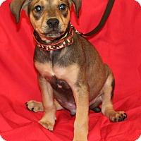 Adopt A Pet :: Rio - Umatilla, FL