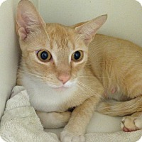 Adopt A Pet :: Pebbles - Putnam Hall, FL