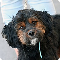 Adopt A Pet :: Wolfie - Palmdale, CA