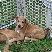 Adopt A Pet :: Lara - CHESTERFIELD, MI