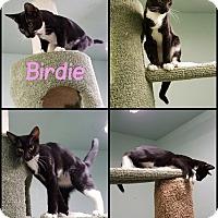 Adopt A Pet :: Birdie - California City, CA