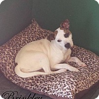Adopt A Pet :: Brinkley - mooresville, IN