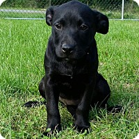 Adopt A Pet :: Amarillo - Columbia, MD