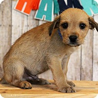 Adopt A Pet :: Darwin - Waldorf, MD