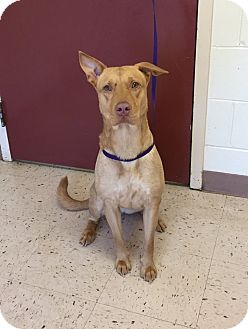 Shepherd (Unknown Type) Mix Dog for adoption in McDonough, Georgia - Tipsy