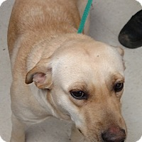 Adopt A Pet :: 59016 Time Up - Franklin, GA