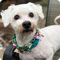 Adopt A Pet :: Bam - Florence, KY