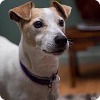 Adopt A Pet :: OSCAR - Peterborough, ON