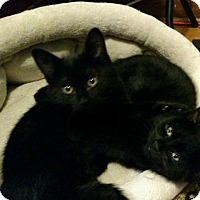 Adopt A Pet :: Moe and Joe - Maywood, IL