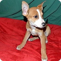 Adopt A Pet :: Aiden - East Sparta, OH