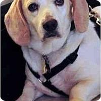 Adopt A Pet :: Carter - Novi, MI
