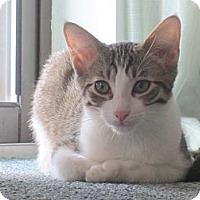 Adopt A Pet :: Carla (& Fiesta) - Arlington, VA