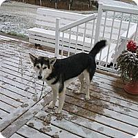 Adopt A Pet :: Jet - Egremont, AB