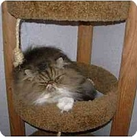 Adopt A Pet :: McDuff - Davis, CA