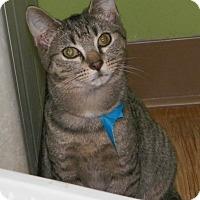 Adopt A Pet :: Teddy Bear - Dover, OH