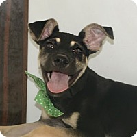 Adopt A Pet :: Ottie - Surrey, BC