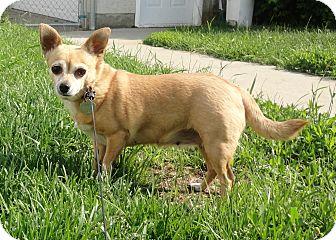 Edmonton Small Dog Rescue