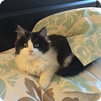 Adopt A Pet :: Kane - Edmonton, AB