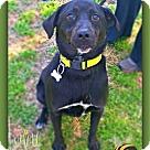 Adopt A Pet :: Angelo