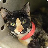 Adopt A Pet :: Cookie (foster care) - Philadelphia, PA
