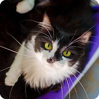 Adopt A Pet :: Adele - Greenwood, SC