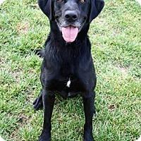 Adopt A Pet :: Atreyu - Las Vegas, NV