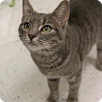 Adopt A Pet :: Jenny - Toronto, ON